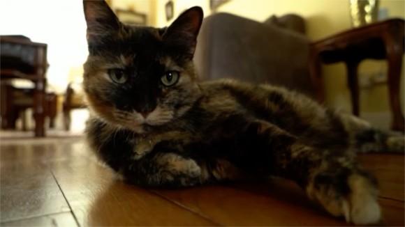 猫コロナから回復