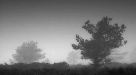 fog_23