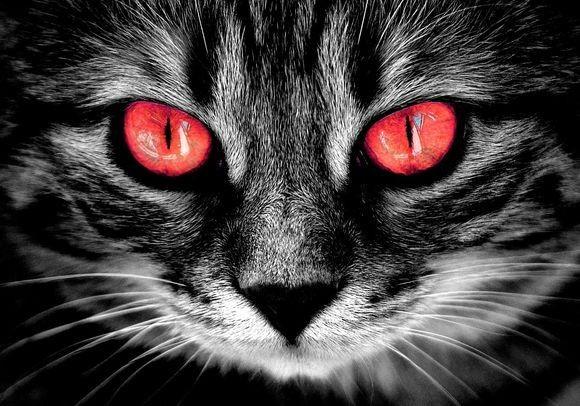 cat-eyes_pixabay