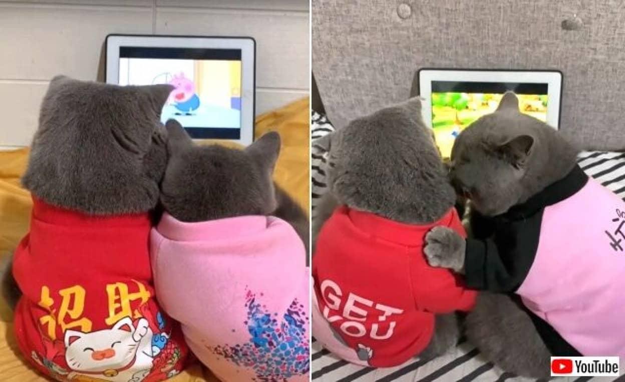 cartooncats6_640