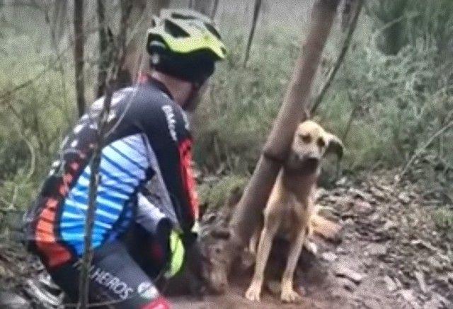 なんでこんなひどいことを!木に首をくくりつけられたまま放置されていた犬が発見された