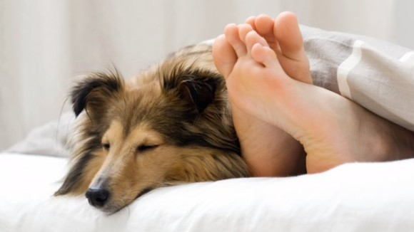 最強のアンチエイジングは犬を飼うこと。犬を飼っている人は10歳ちかく若返るという調査結果(英研究)
