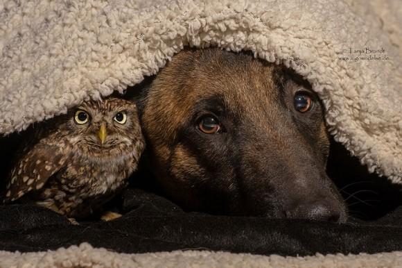 まるでおとぎ話にでてくるような、犬とフクロウ