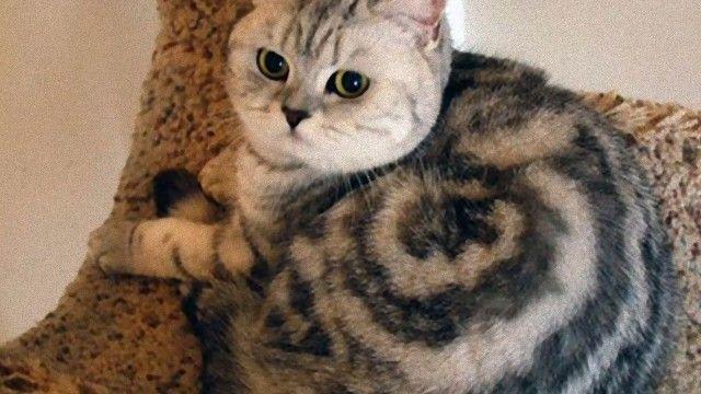 偶然か必然か。毎日不思議がいっぱい。猫たちの不思議な瞬間スナップショット集