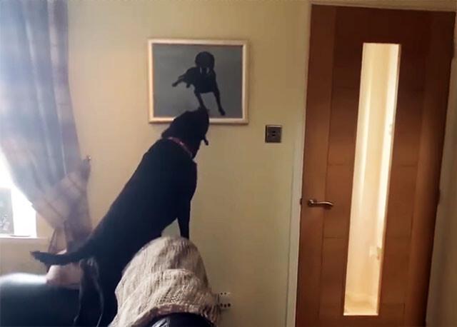 亡き兄の肖像画を見た弟犬の反応が涙を誘う