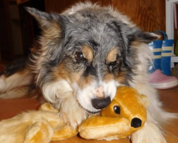 13年もの間、木の上にいるリスに片思いしてた犬。逃げ足の速いリスの代わりに飼い主がこんなプレゼントを!