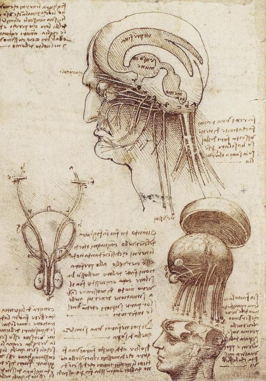 brainphysiologyep2