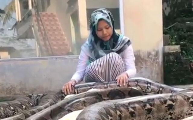 巨大ヘビを愛でる少女
