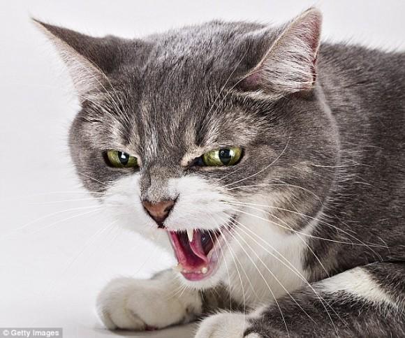 猫の毛色と攻撃性は関連がある可能性が示唆される(米研究)