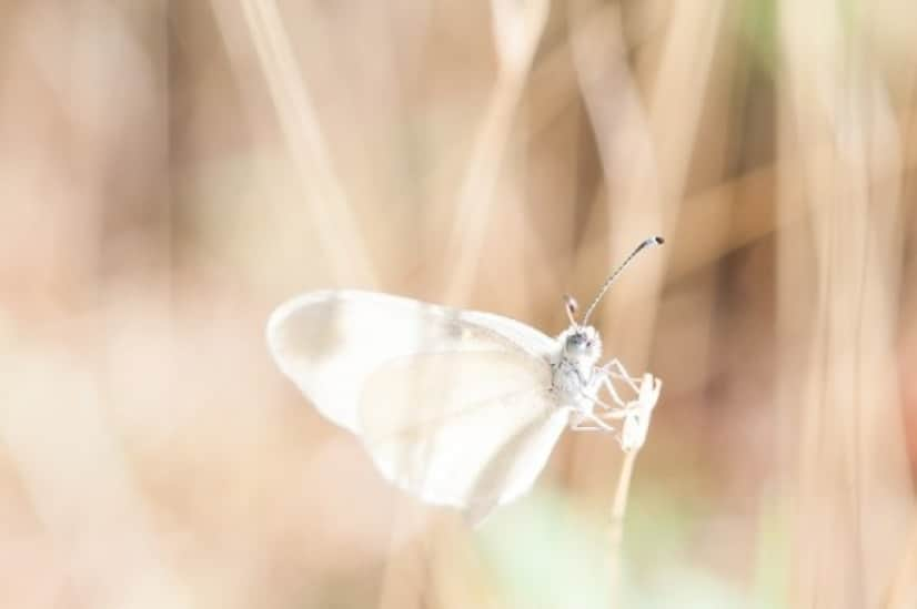 dragonfly-918571_640_e