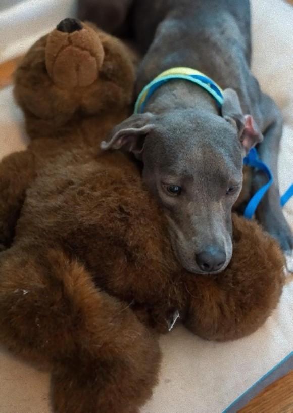 dog and bear2_e