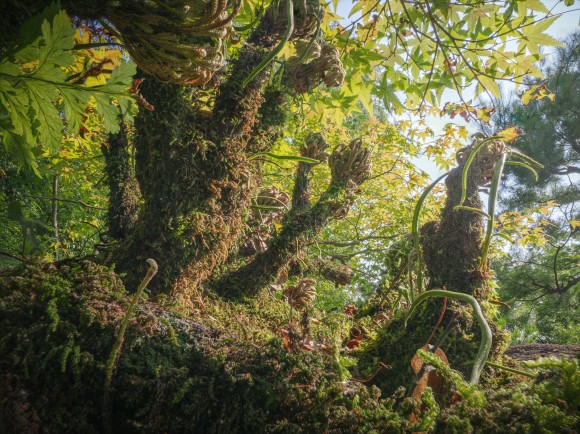 もし身長が1インチ(2.54cm)だったら?虫目線でしかみることができない神秘の自然の景色「1 inch world」