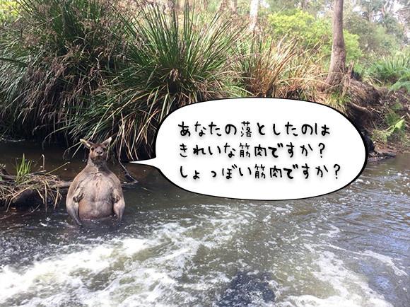 あなたが落としたのはこの筋肉ですか?水の中からマッチョなカンガルーがザバッと現れるとかいうホラー(オーストラリア)