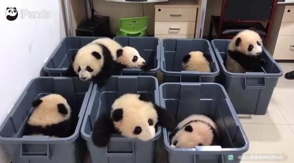 まったく叩く気がしない。パンダのモグラ叩きゲームのゆっくり感