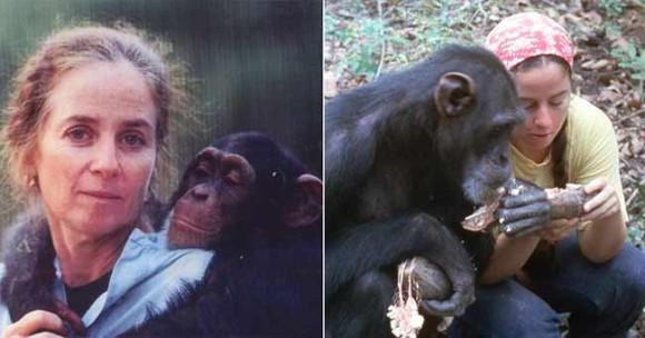 人馴れしたチンパンジーを野生に戻すため、無人島で6年かけて野生化に成功させた女性の物語cover_e