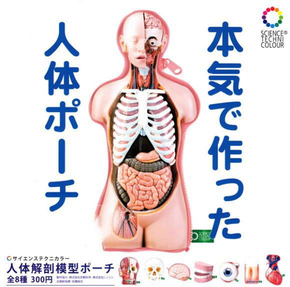 なぜそれに本気だした?クオリティ高めな「人体解剖模型ポーチ」がカプセルトイとなって販売開始!