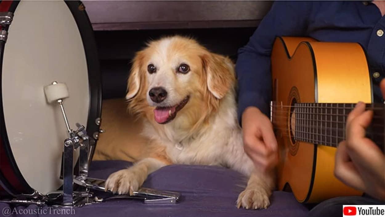 犬のドラマーが飼い主と演奏
