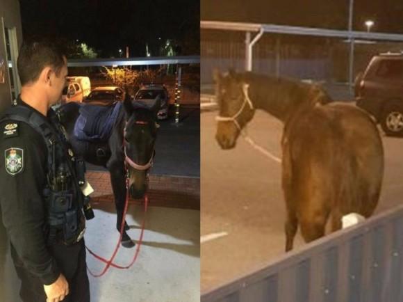 飲酒運転で逮捕された女性。ただし乗っていたのは馬(オーストラリア)