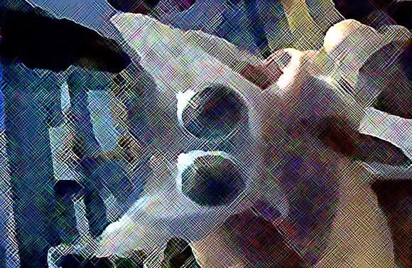 宇宙から来たクリーチャー風。メキシコで水揚げされた双頭のサメの胎児(閲覧注意)