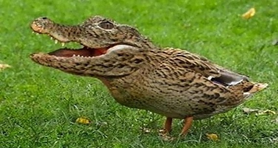 alligator_chicken_e