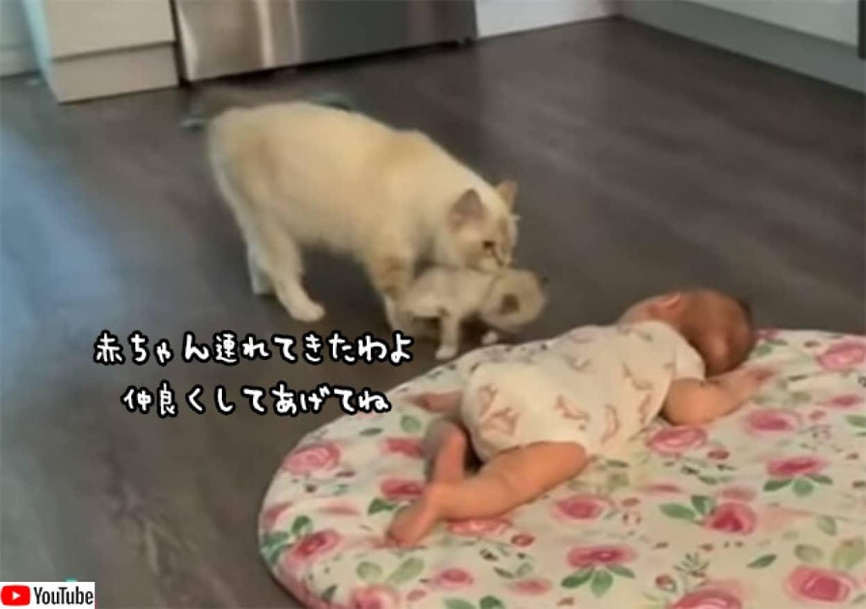 ちびっこ集め。母猫が人間の赤ちゃんに自分の赤ちゃん猫を見せに来た