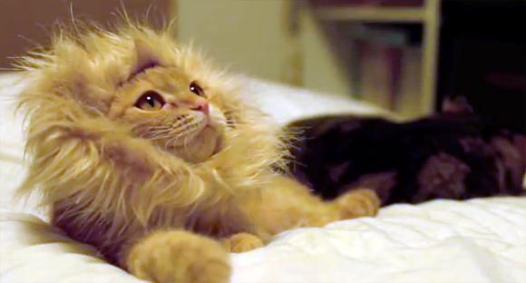 けだるい猫ライオンがいる風景