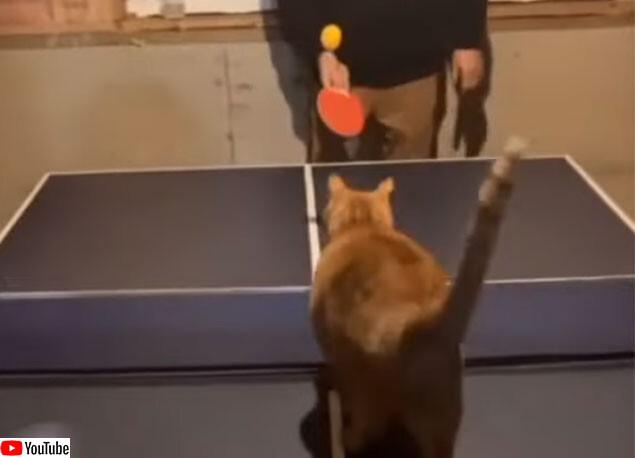 卓球ができる猫がすごい