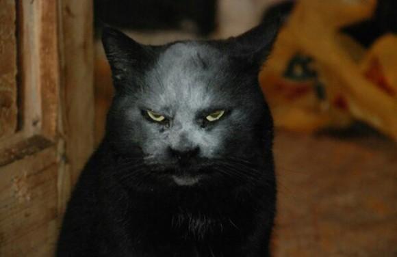 黒猫 ハロウィン