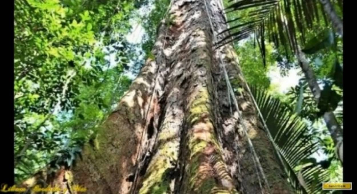 tree3_e
