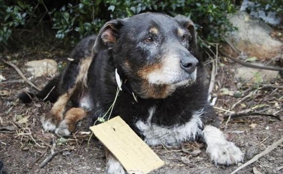 突如姿を消した老犬。その驚きの理由は、首元に結びつけられたメモ書きで明らかに(ニュージーランド)