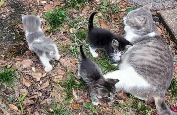 やさしくしてくれたから特別に見せてあげる。女性が案内された場所には生まれたばかりの5匹の子猫が!