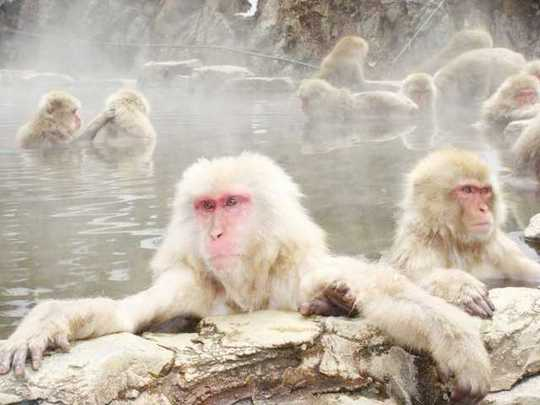 snow-monkeys-3