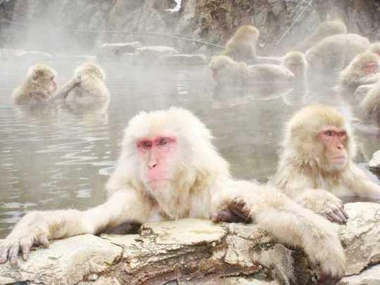 snow-monkeys-3