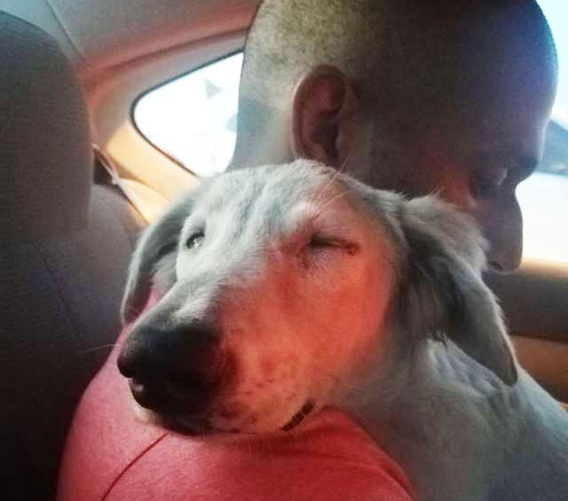 初めて出会った男性を運命の人と信じた野良犬のハッピーエンド物語(アラブ首長国連邦)