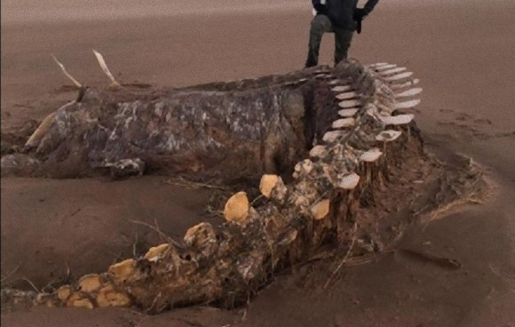 これはいったい?スコットランドの海岸に奇妙な骨が打ち上げられる(イギリス)