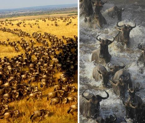 animal_migrations_2b