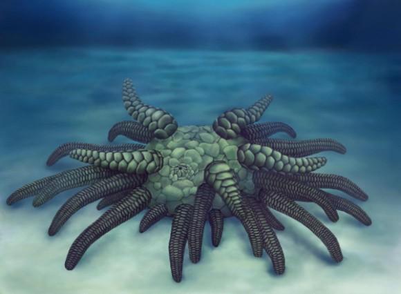クトゥルフ神話に出てくるような禍々しい太古の海のクリーチャーが発見され「ソラシナ・クトゥルフ」の名がつけられる