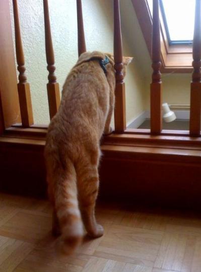 seeing_life_through_cats_eyes_52