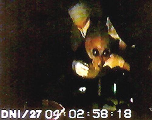 alien-21