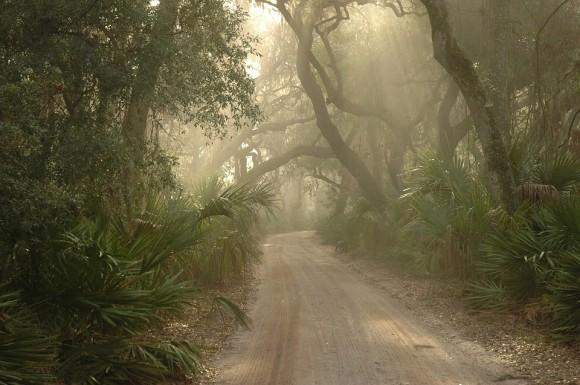 foggy-road_e