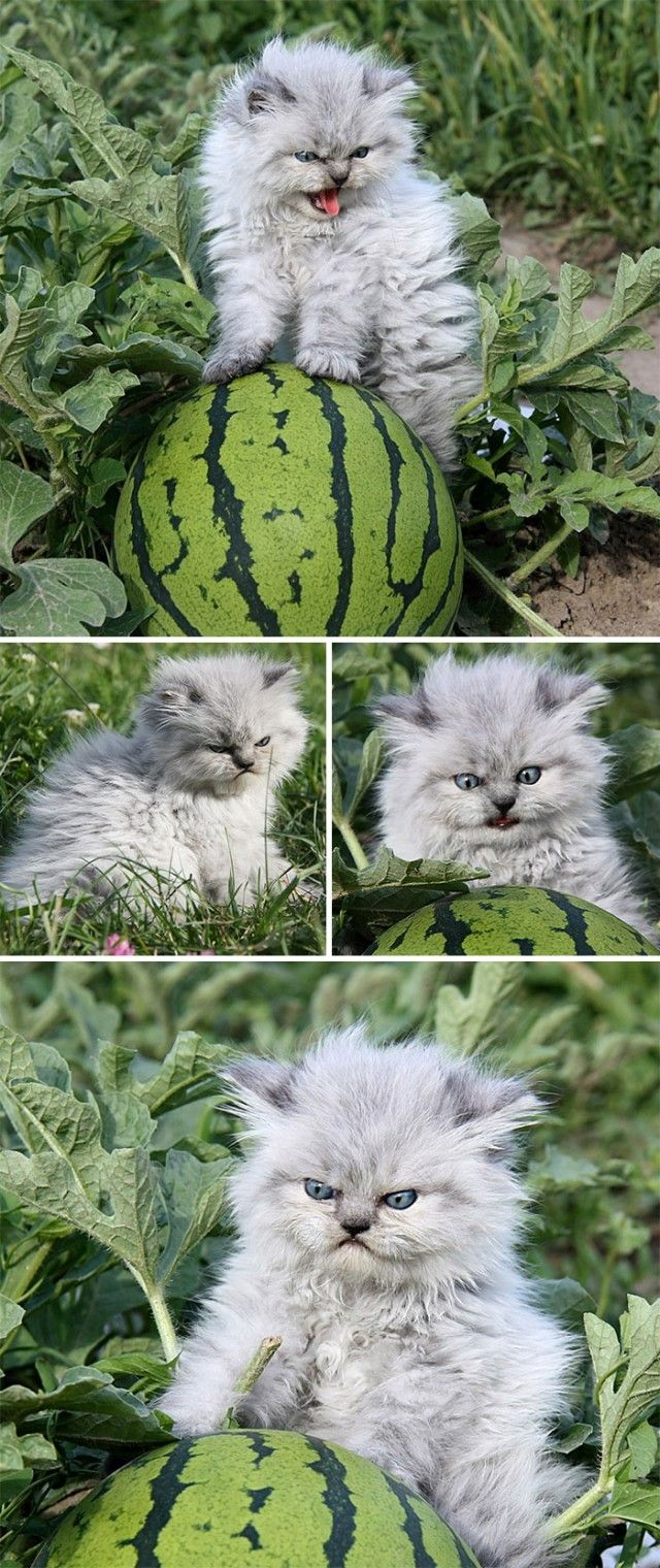angry-kittens-17-591afb1e2444c__700_e