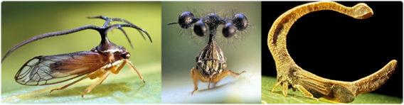 どうみても空想上の生物にしか見えないシュール装飾なツノゼミたちの画像