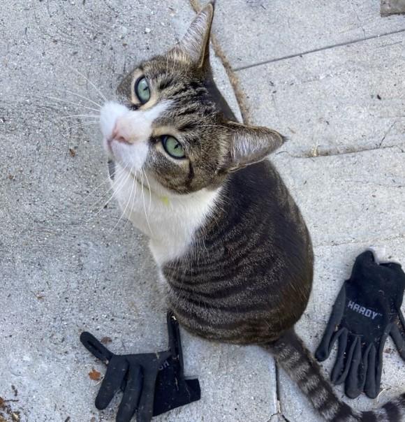 ご近所で盗みを繰り返す泥棒猫、その理由は飼い主にプレゼントするため