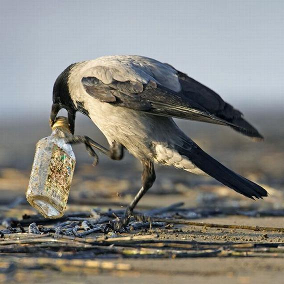 beautiful_photographs_of_birds_05