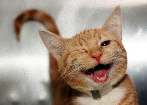 幸せ伝染注意報。ニコっと笑って幸せそうに見える動物たちの写真+動画