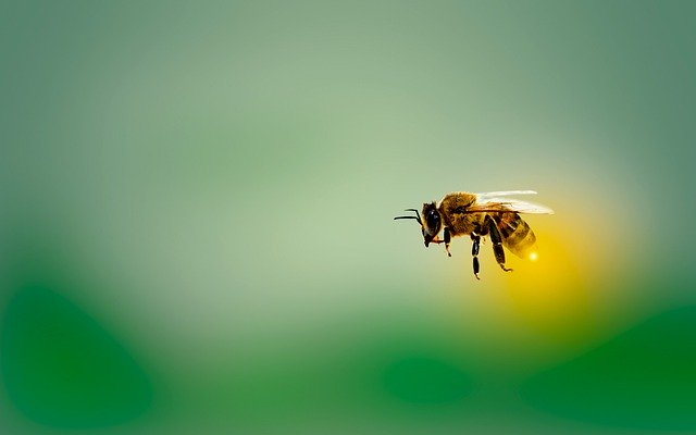 ミツバチの毒が乳がんの治療に効果