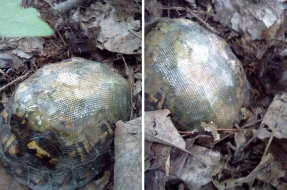 turtle_with_fiberglass