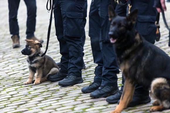 忠誠を尽くすことが僕たちの役目だから。厳しい訓練の末、軍用犬や警察犬となった20の犬たちと人間の関わり合い
