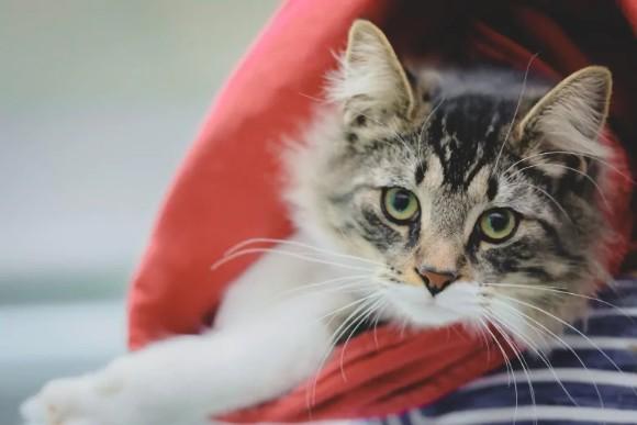 ダンボールにホイホイしてしまった子猫。うっかり荷物と間違えられ長距離輸送される(カナダ)
