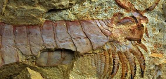 カンブリア紀にクトゥルフが存在?